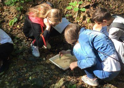 ND Organizmi celinskih voda (5)