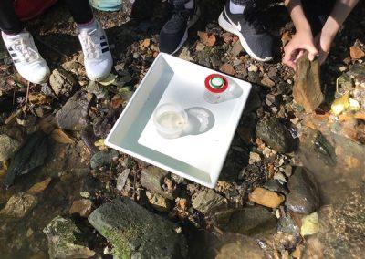 ND Organizmi celinskih voda (7)